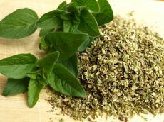 Oregano - beneficii care dau gust vieții tale!