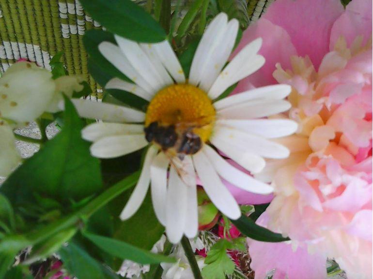 Natură cu flori și albine