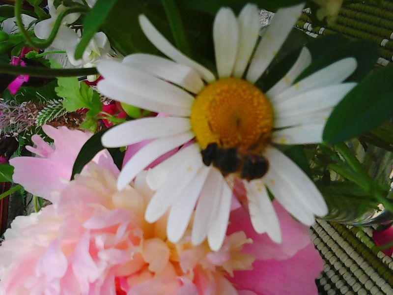 Albină pe flori