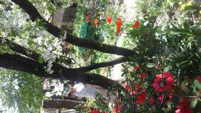 Pomi în floare - primăvara