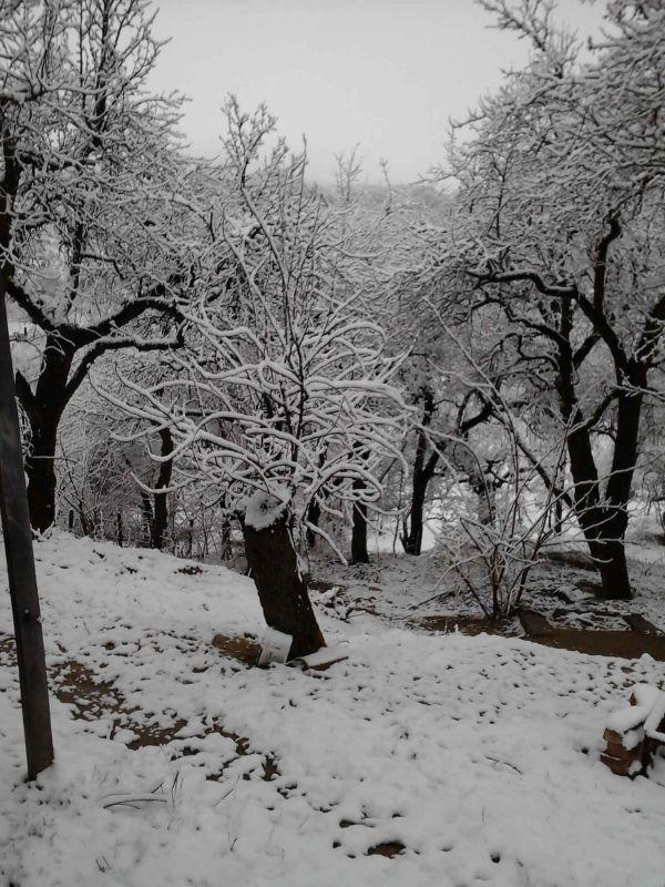 Iarna în livadă