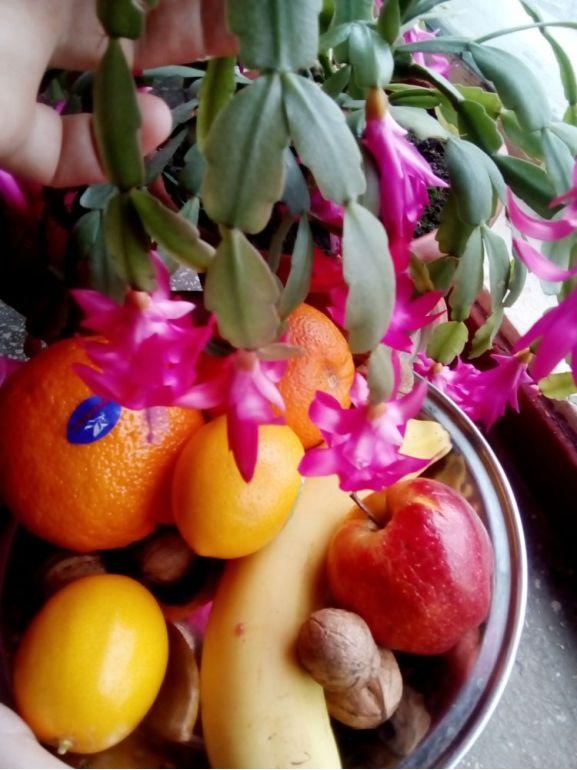 Clopoței de Crăciuniță și fructe