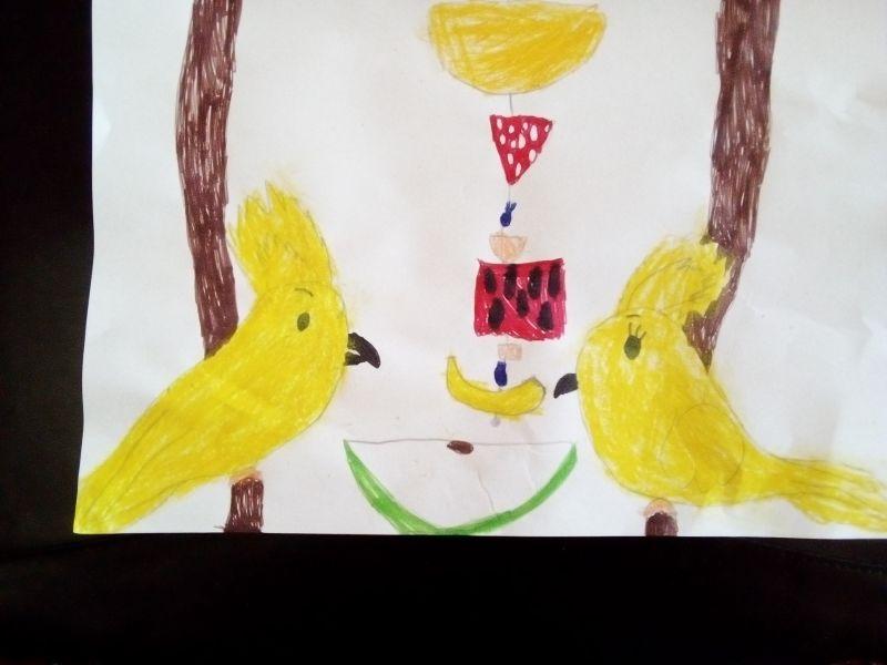 Papagali și cute de fructe
