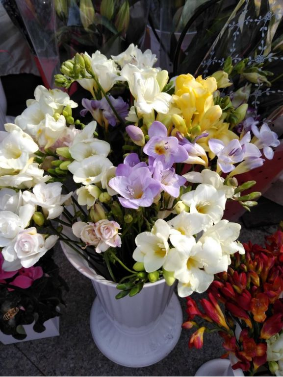 Buchet cu frezii - Bouquet avec freesias