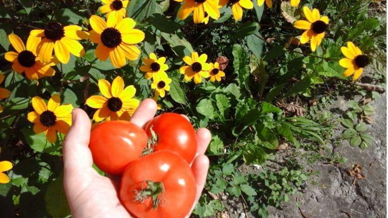 Flori de grădină și legume bio