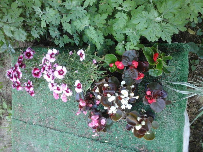 Grădină cu flori