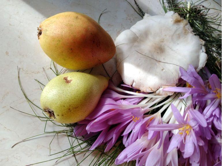 Miracolul toamnei - Brândușe și fructe