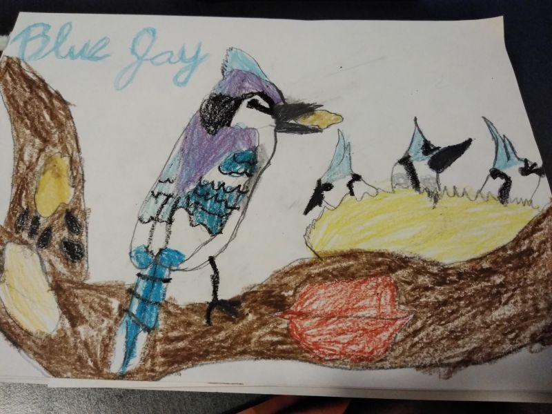 Împărăteasa și pasărea Blue Jay