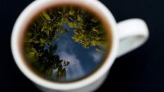 Ceai de fructe de pădure – beneficii și proprietăți