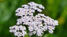 Top 5 ceaiuri din plante medicinale existente în România