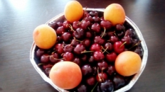 Fructe și grisine cu mac - premii la concurs