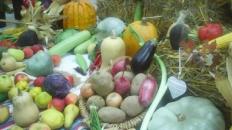 Alfabet cu legume și cu plante aromatice