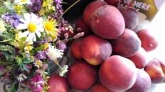 Garofițe nemțești, margarete și fructe