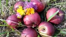 La cules de nuci, de mere și de pere