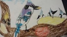 Împărăteasa și pasărea Blue Jay – povestire pentru copii
