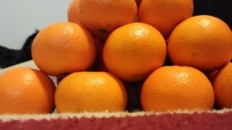 Piramide din fructe